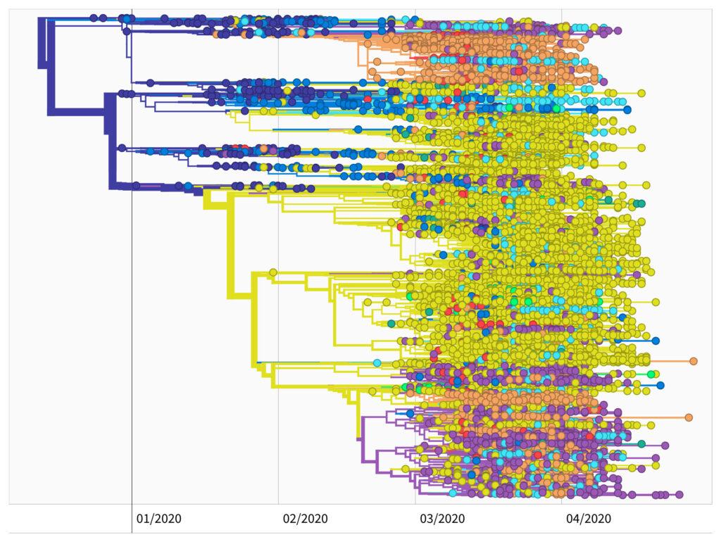 genetischer Verwandtschaftsbaum des SARS-CoV-2 Virus