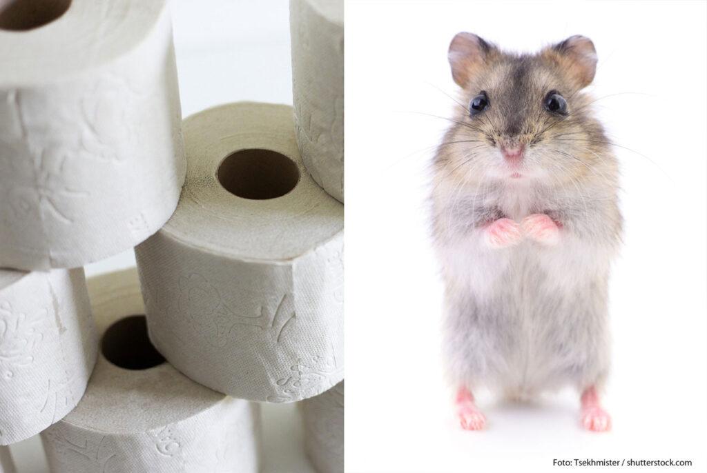 Hamster und Toilettenpapier